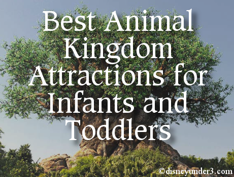 Animal Kingdom Attractions